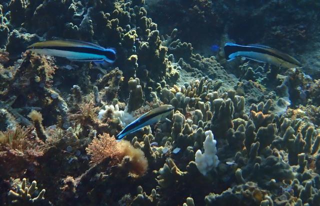 Valse poetsvis is niet te onderscheiden van gewone poetslipvis